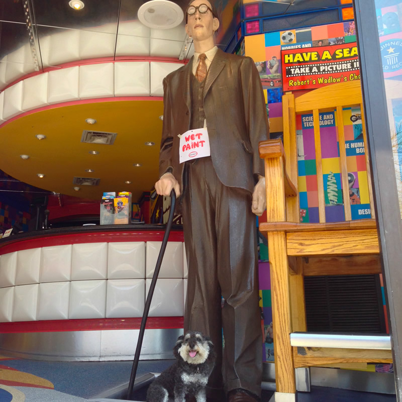 Willie walks up Clifton Hill in Niagara Falls Canada and sits next to the world's tallest man Robert Wadlow