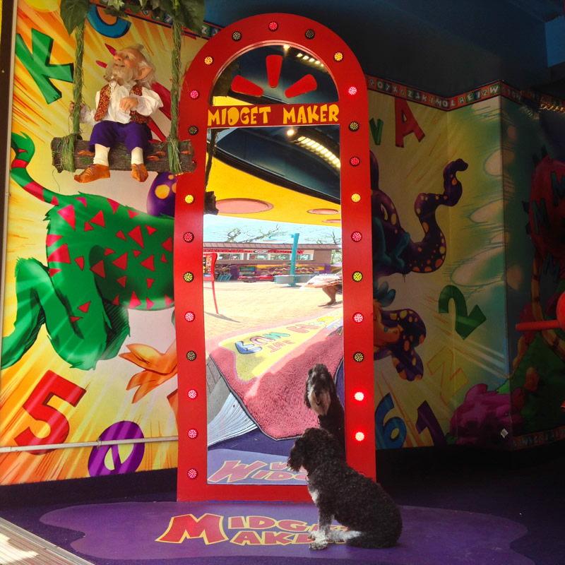 Willie walks up Clifton Hill in Niagara Falls Canada and looks into a funhouse mirror