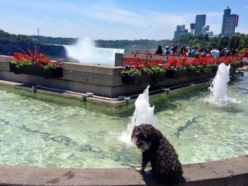 Willie cools off at a fountain next to Niagara Falls