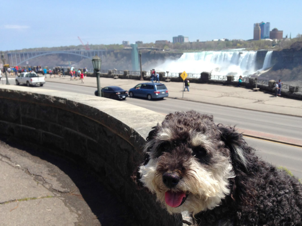 Willie spends a day at Niagara Falls Canada