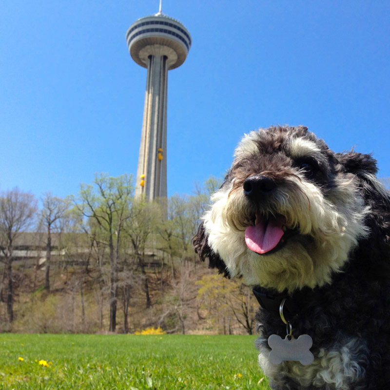 Willie at the Skylon Tower in Niagara Falls Canada