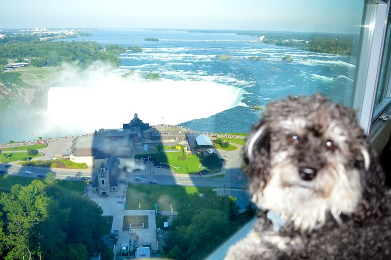 Willie looks out the window of the hotel room to see Niagara Falls Canada