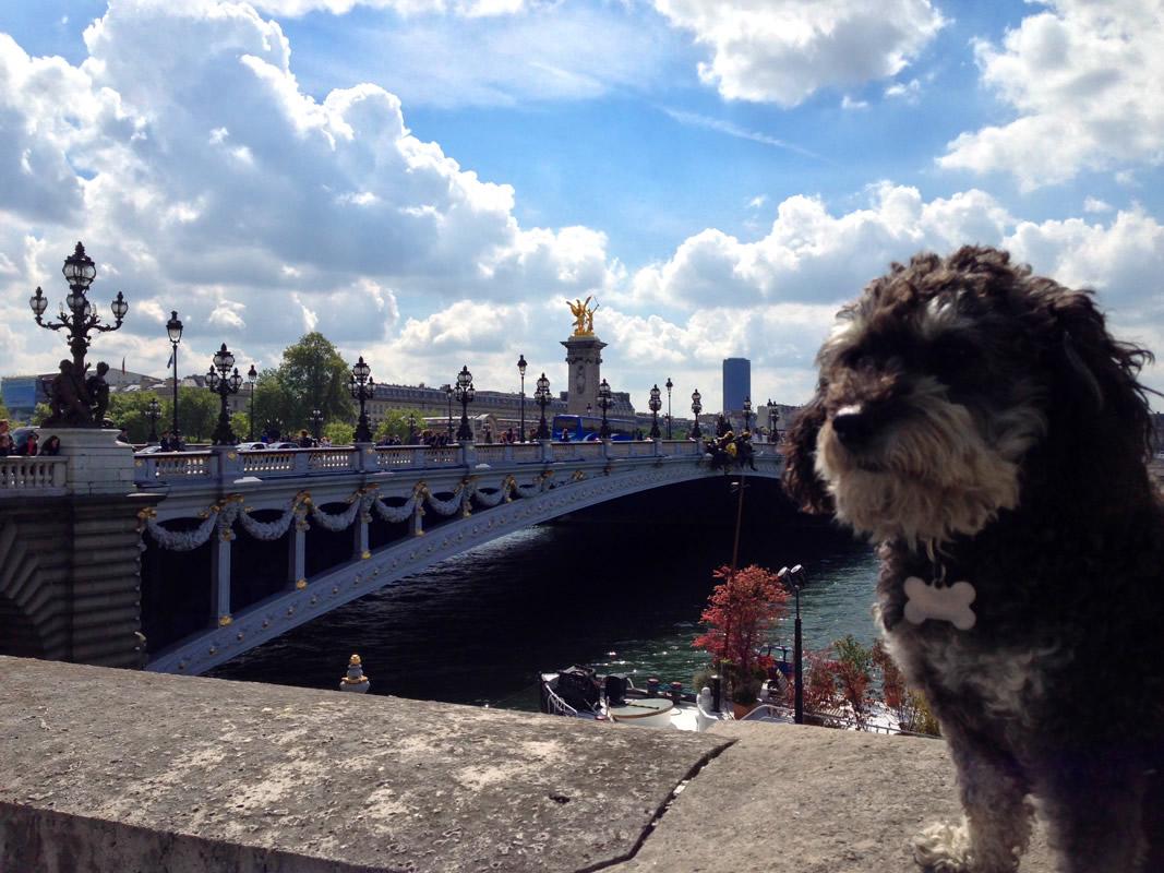 Willie at the Port des Champs-Élysées in Paris France