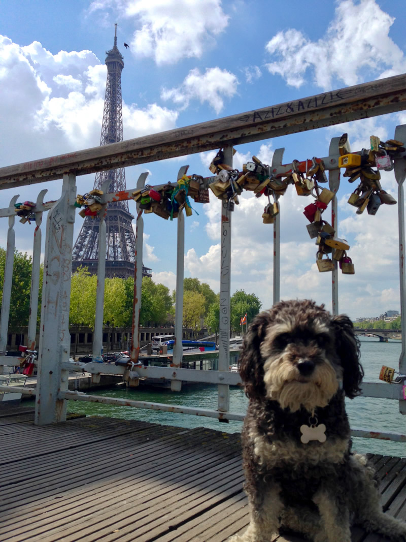 Willie at the Eiffel Tower in Paris
