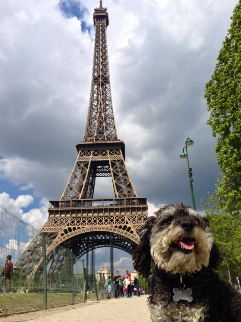 Willie at the Eiffel Tower in Paris France