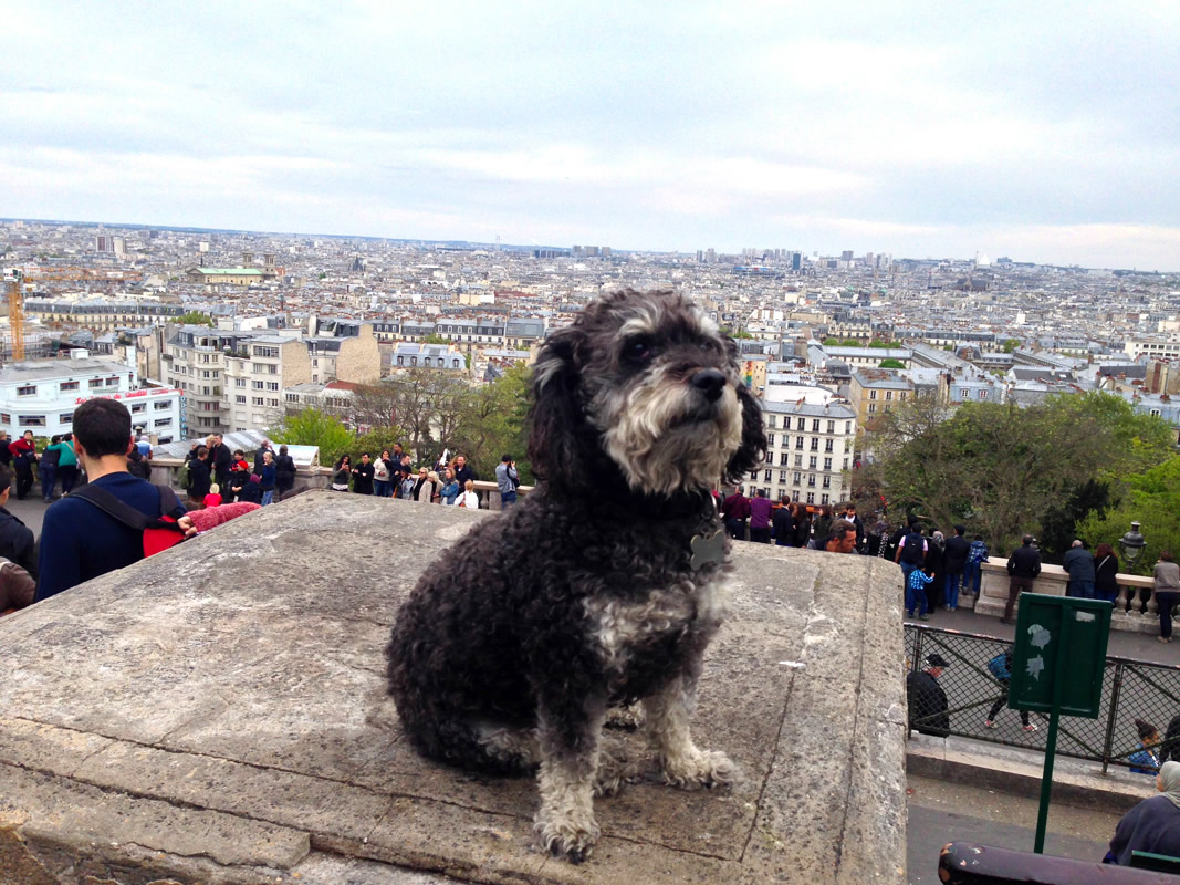Willie takes in the view of Paris from The Basilica of the Sacred Heart (Sacré-Cœur) in France