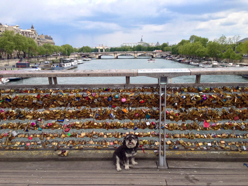 Willie stops on a bridge full of Love Locks in Paris France