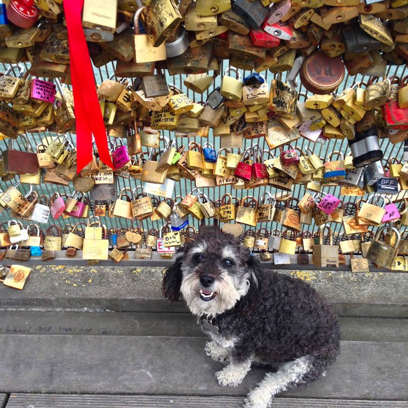 Willie in front of the Love locks on the bridge in Paris France