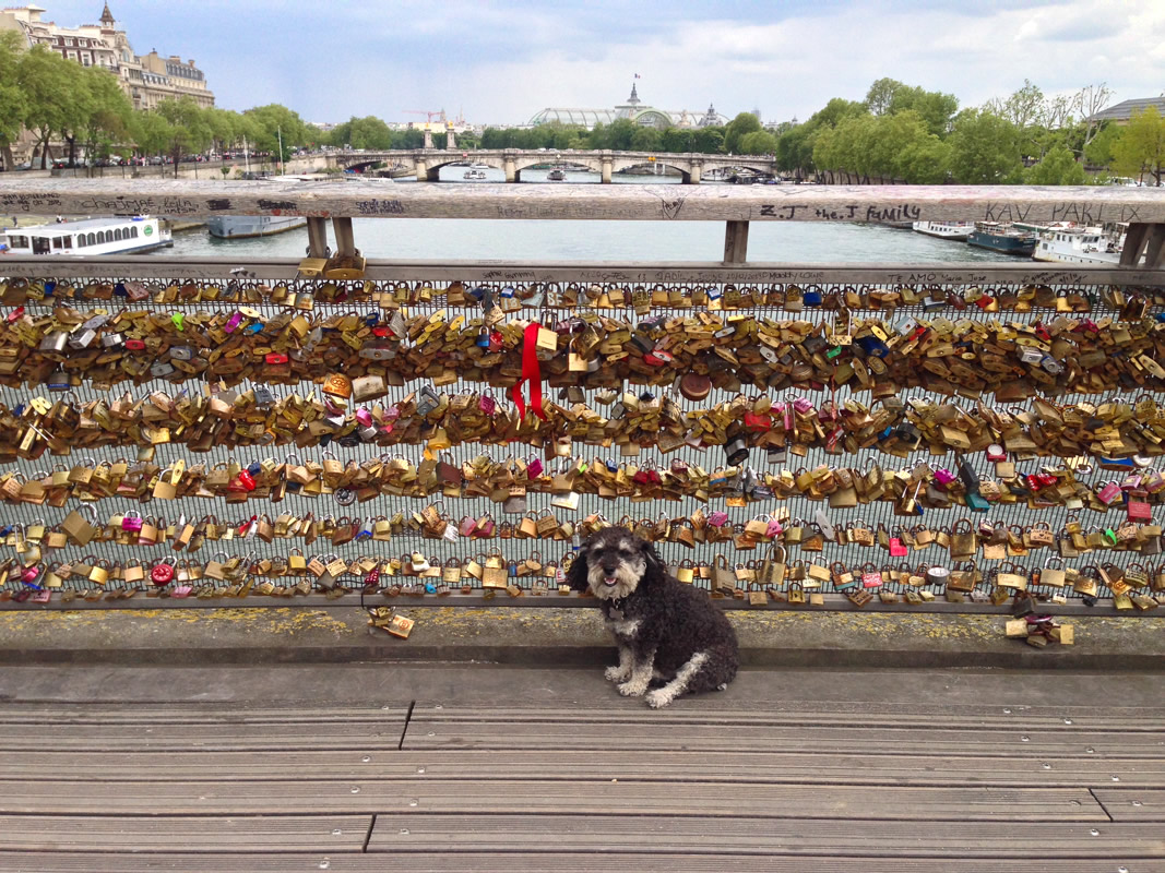 Willie at the Love locks on the bridge in Paris France