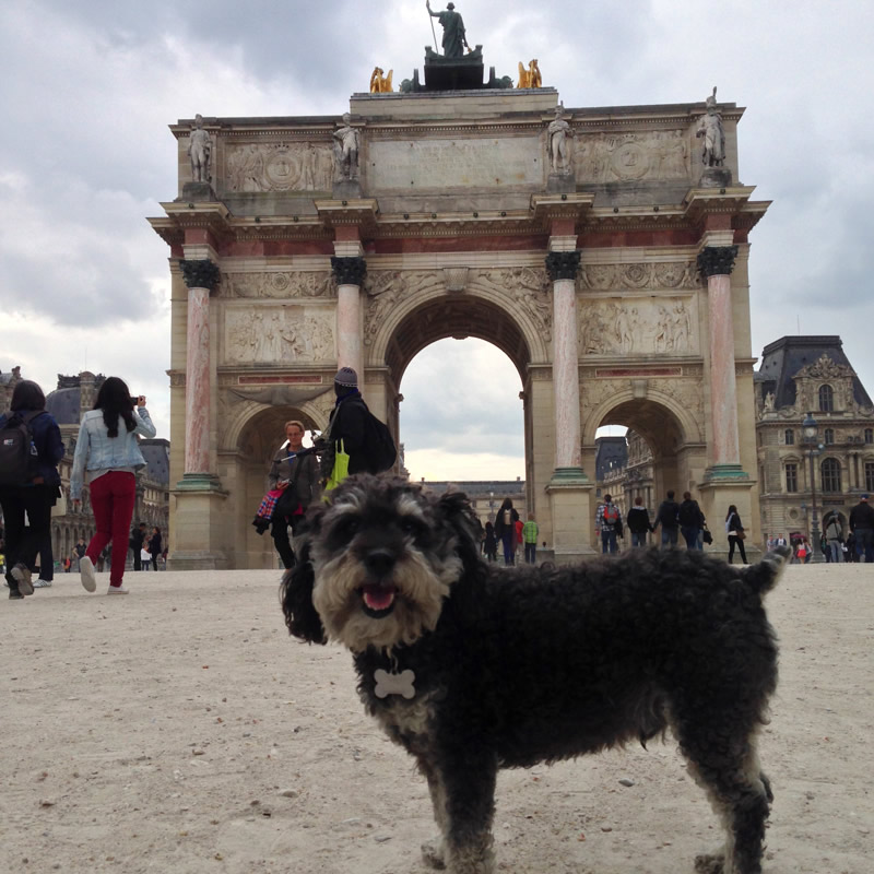 Willie on a walk in Paris France