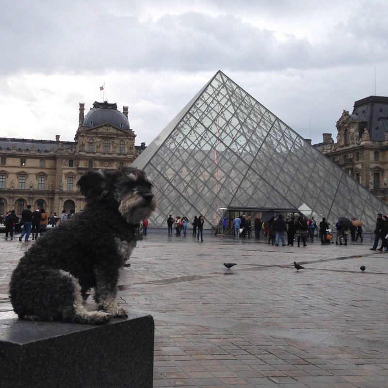 Willie outside of The Louvre in Paris France
