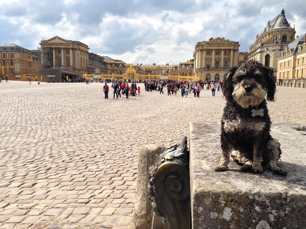 Willie at the Palace of Versailles in France
