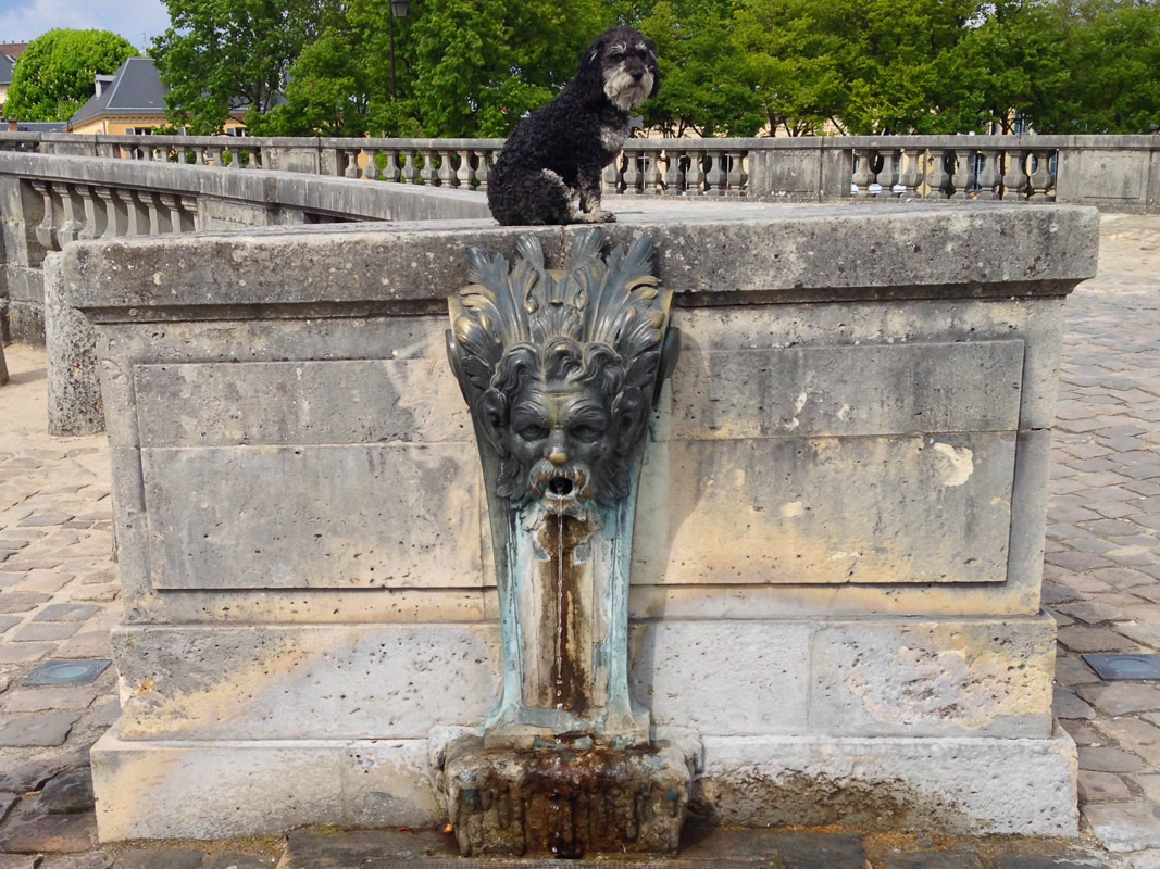 Willie at a water hole in Palace of Versailles in France