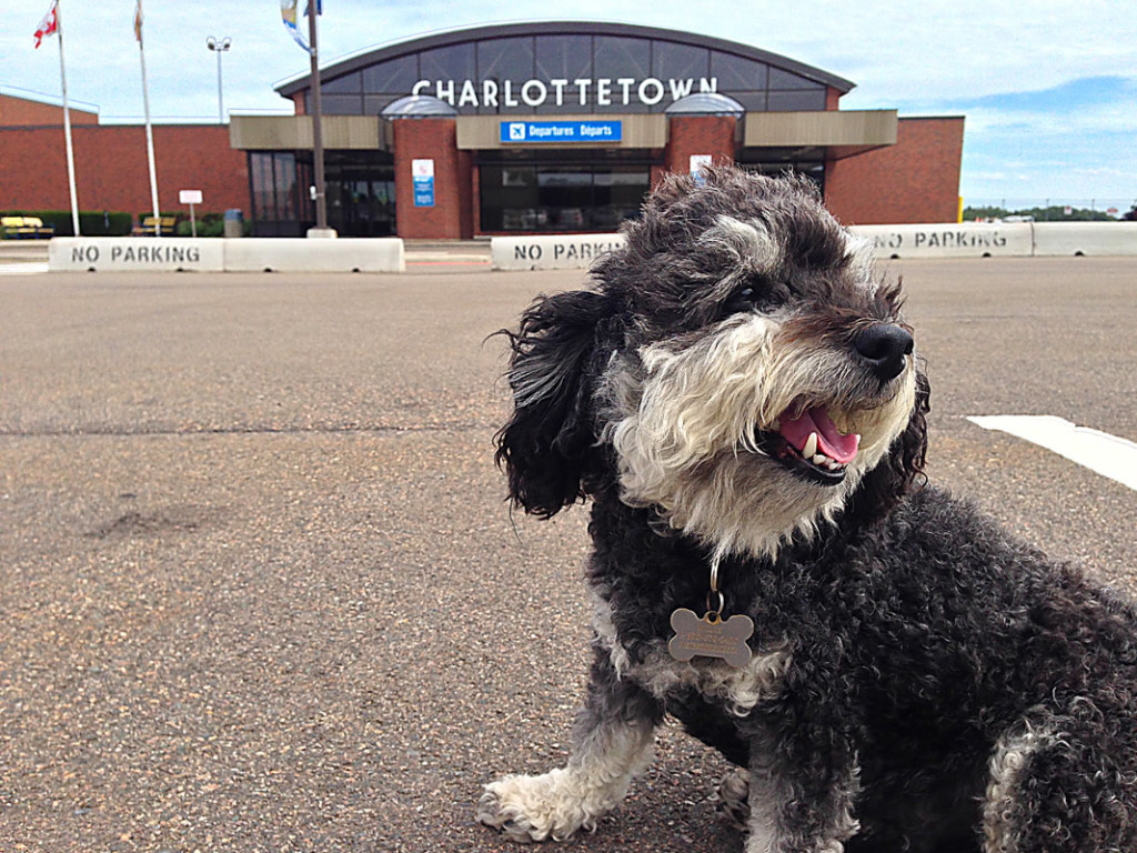 Willie in front of Charlottetown Airport