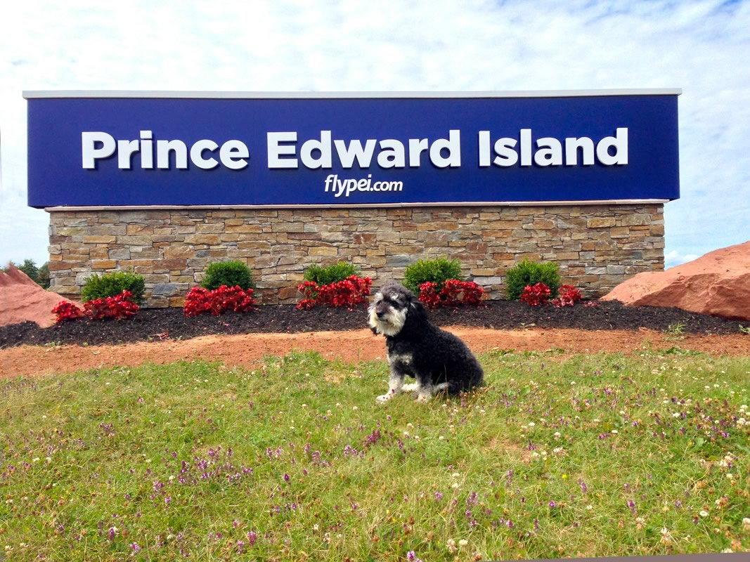 Willie lands at Charlottetown Airport in Price Edward Island