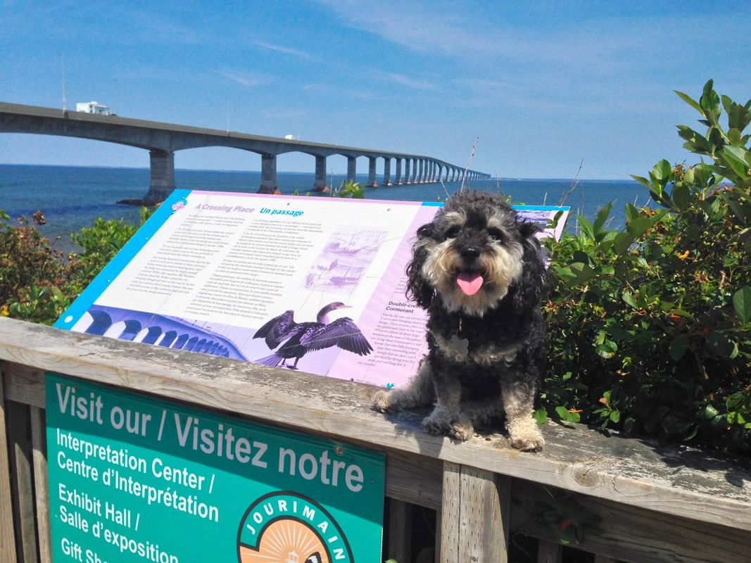 Willie at the Confederation Bridge to Price Edward Island