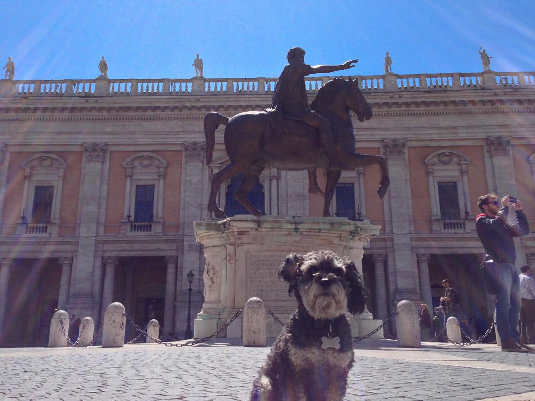 Willie in Piazza del Campidoglio Rome Italy