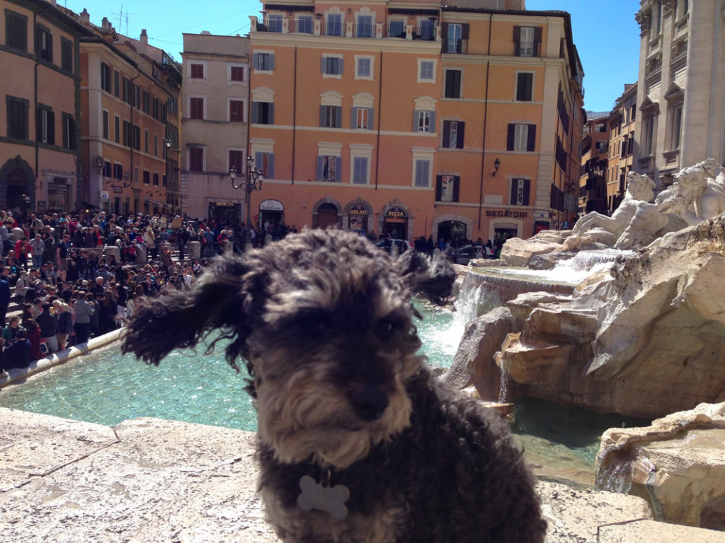 Willie at Trevi Fountain in Rome Italy