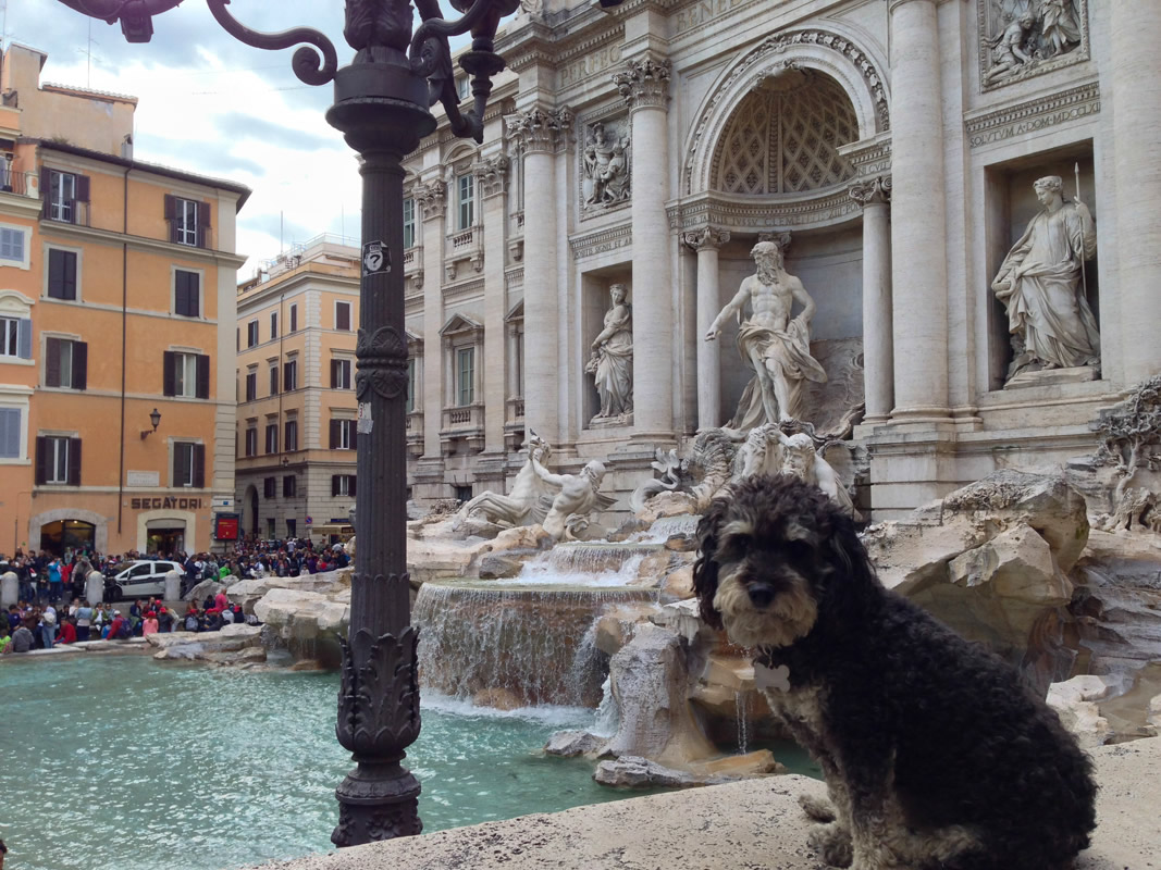Willie at the Trevi Fountain in Rome Italy