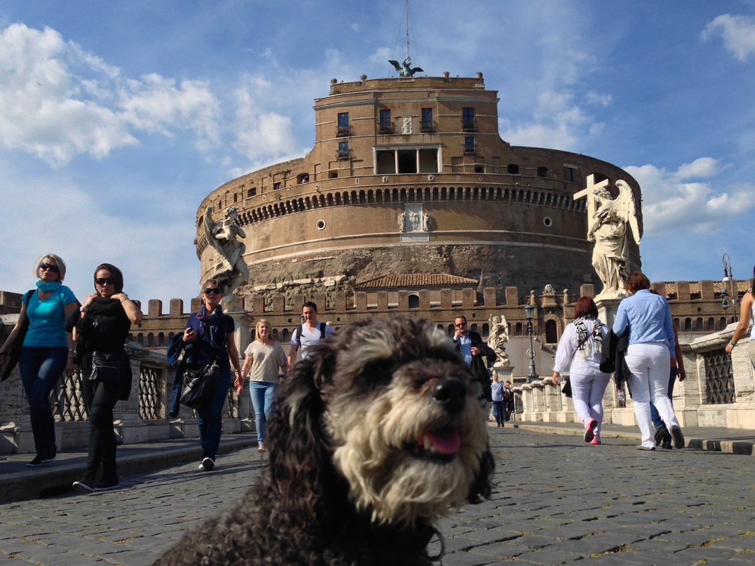 Willie on the bridge leading to Castel Sant'Angelo in Rome Italy