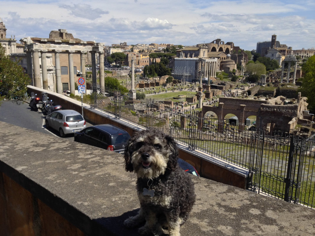 Willie in front of The Roman Forum in Rome Italy