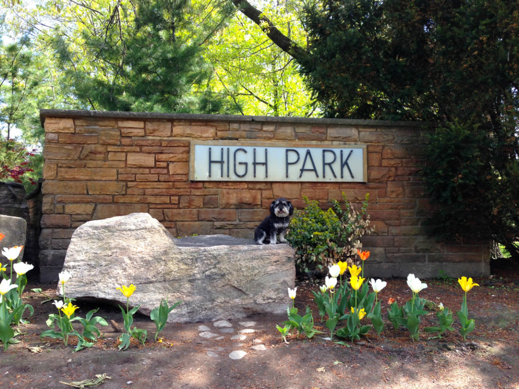 Willie at High Park in Toronto Canada