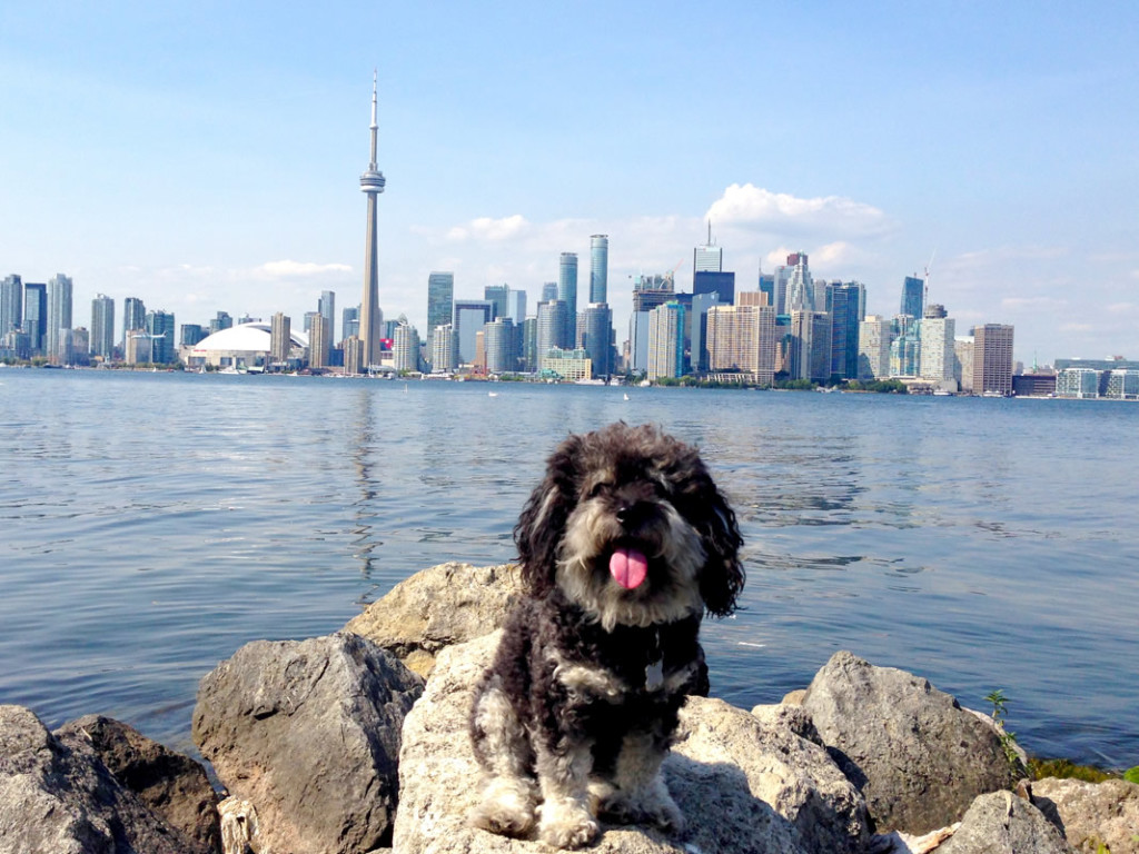 Willie takes in the view of Toronto from Centre Island