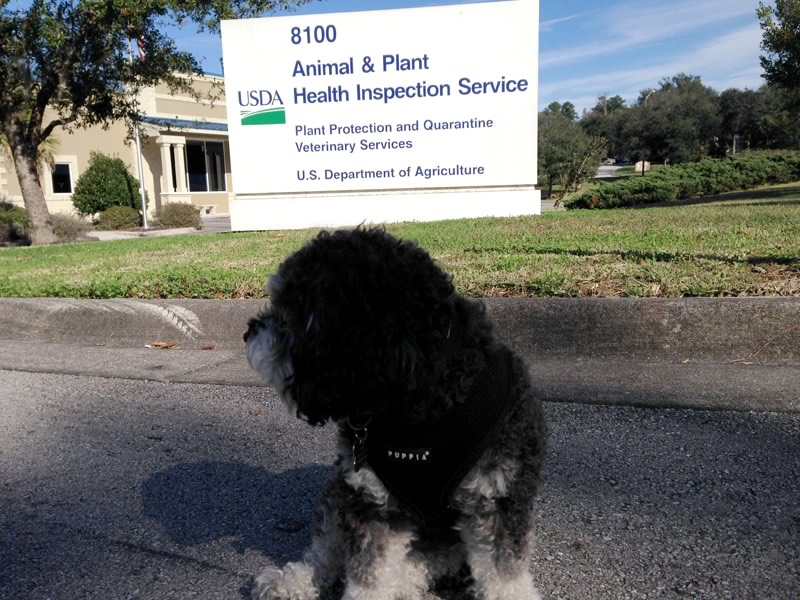 Willie waits for his paperwork to fly at the USDA in Gainesville Florida