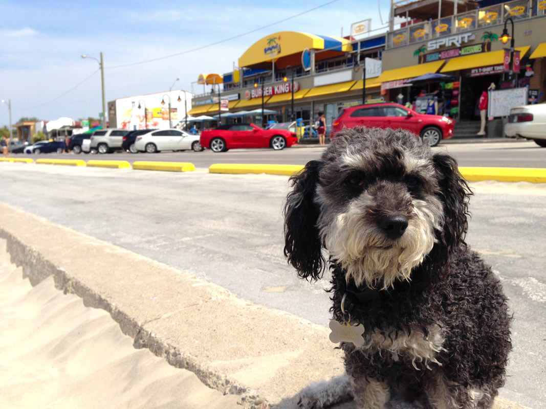 Willie at the main strip of Wasaga Beach at beach area 1
