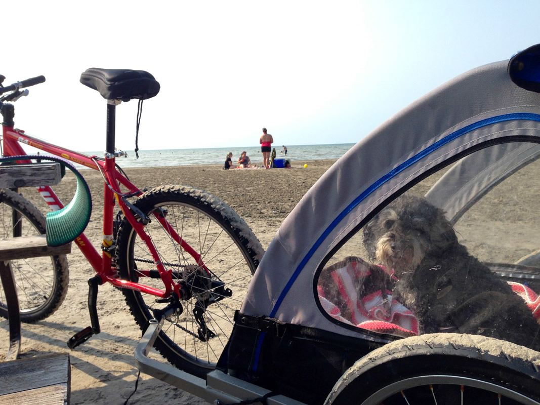 Willie takes a bike ride on Wasaga Beach
