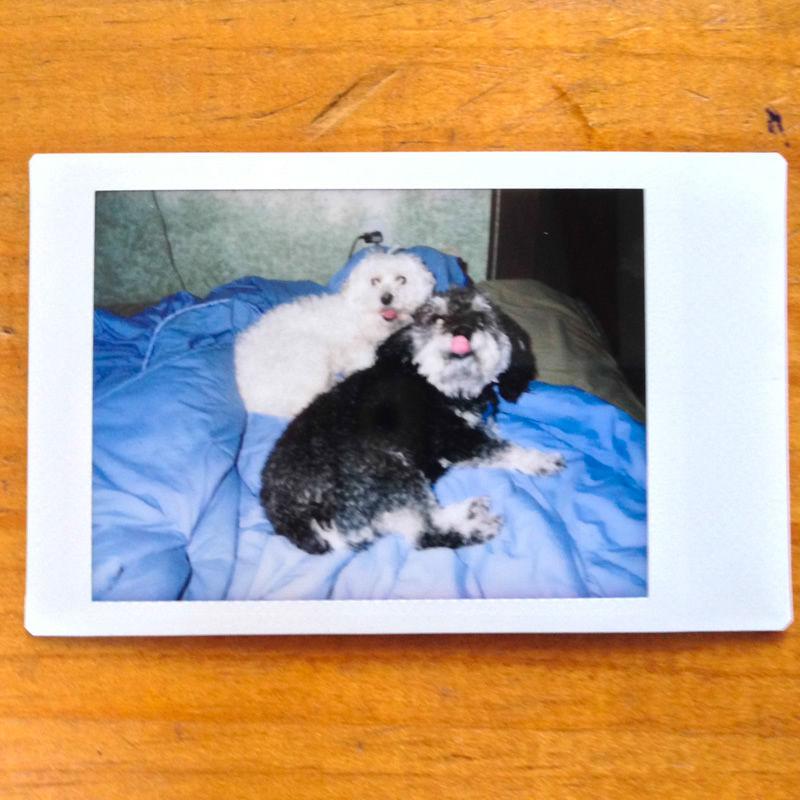 Polaroid of Willie in Canada with Charlie
