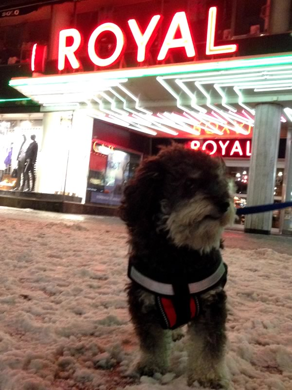 Willie outside of the Biograf Royal in Malmo Sweden