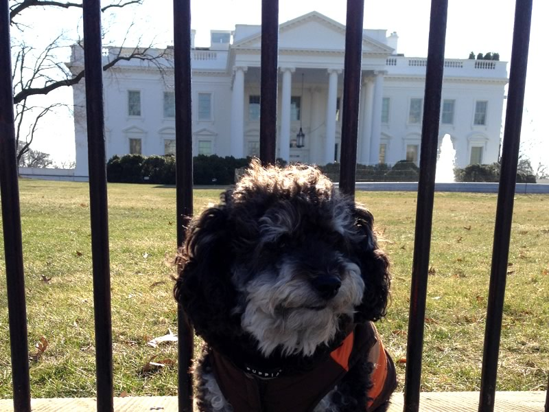 Willie poses in front of The White House at 1600 Pennsylvania Ave