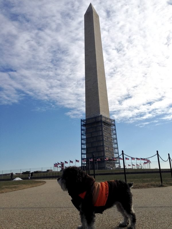 Willie poses in front of the Washington Monument