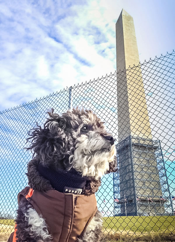 Willie at the Washington Monument in DC