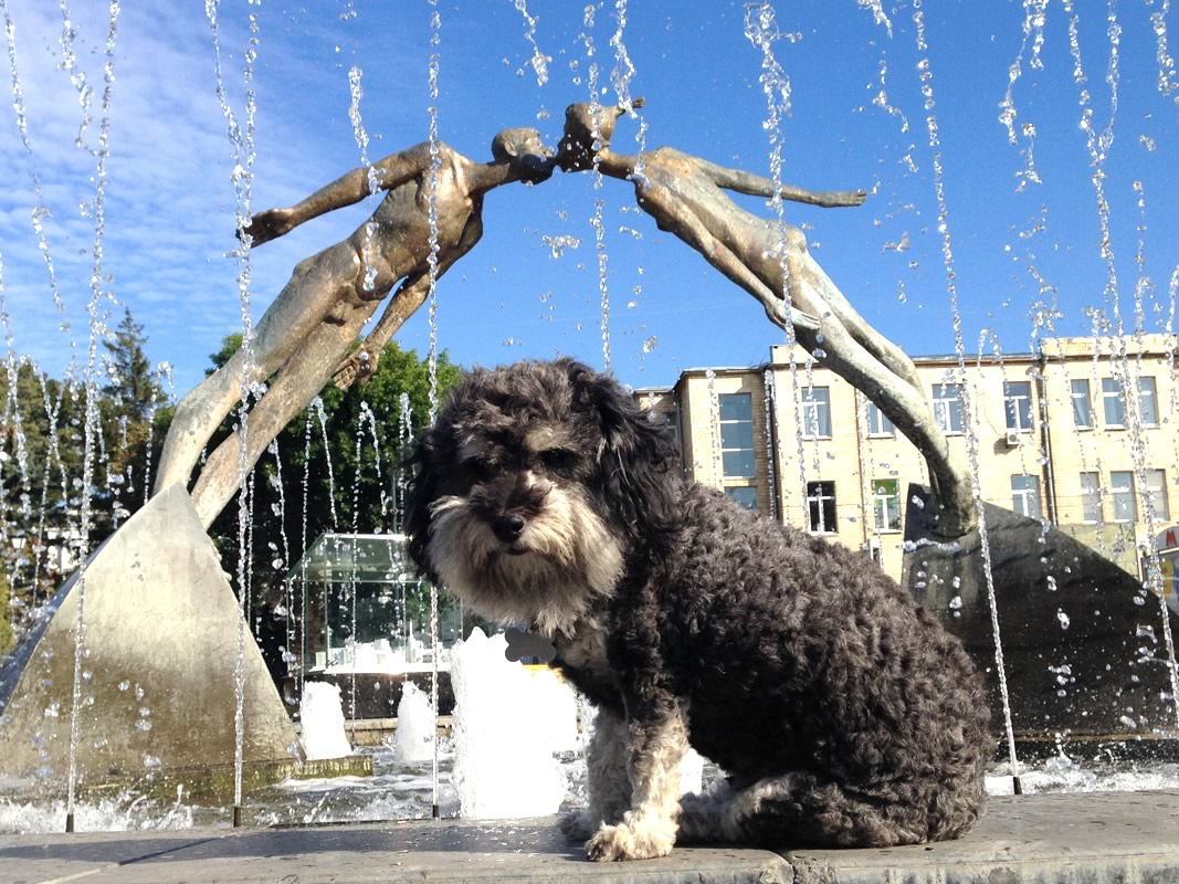 willie at the lovers kissing fountain in kharkiv